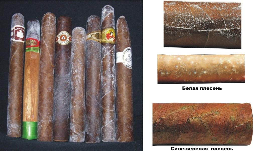 Болезни и лечение сигар